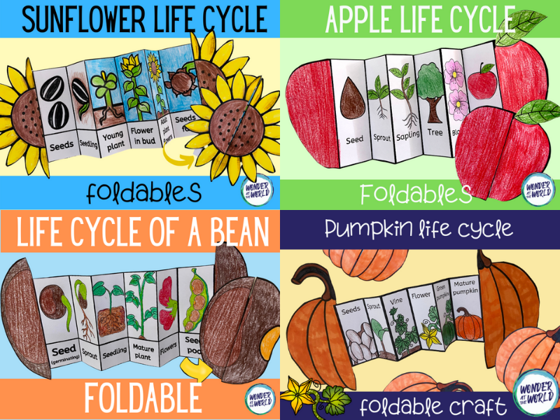 Plant life cycle foldable craft bundle