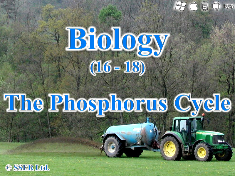 3.5.4 The Phosphorus Cycle