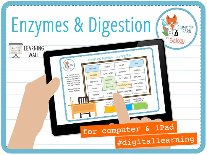 Enzymes and digestion - Digital Learning Wall (KS3/4)