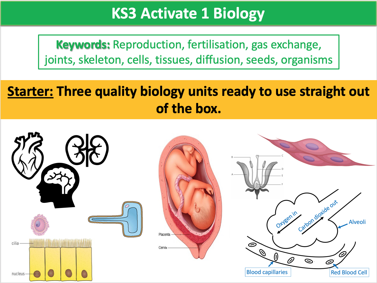 KS3 Activate 1 Biology
