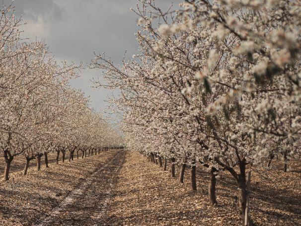 Derek Walcott 'The Almond Trees' - Poem Analysis
