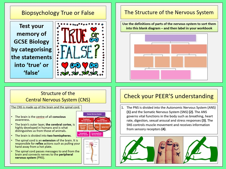 AQA A-level Psychology - The Nervous System - Biopsychology Topic