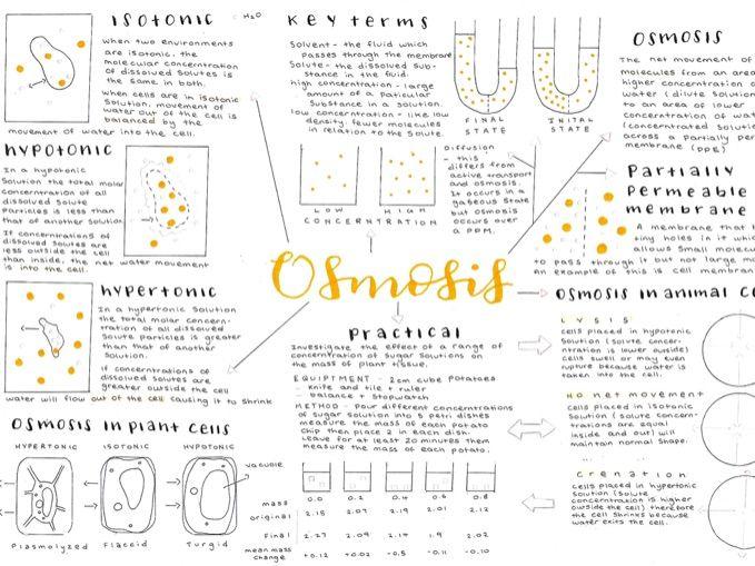 GCSE Biology Osmosis Mindmap - Triple science content AQA