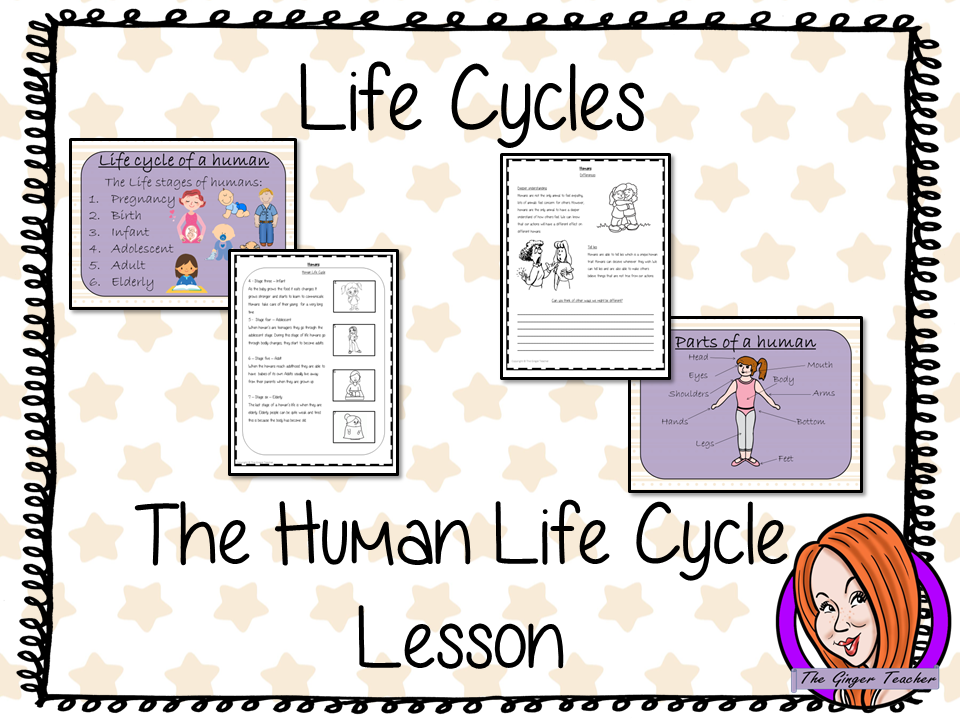 Human  Life Cycles   -  Complete Science Lesson