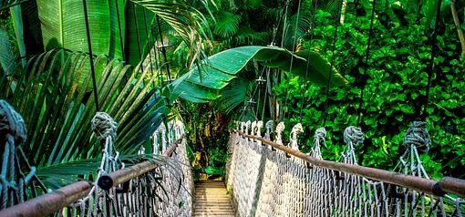 GCSE 9-1; Ecosystems - Sustainable  rainforest management (ecotourism, REDD+, agroforestry)