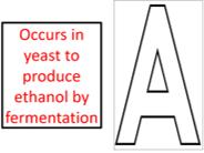 Anaerobic respiration - GCSE