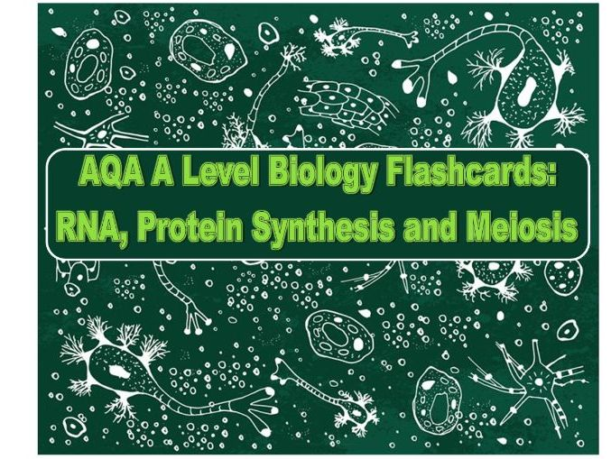 AQA Flashcards Genetic Material + Meiosis + Protein Synthesis A Level Biology