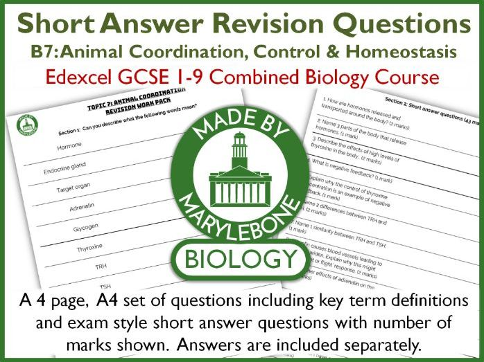 Short Answer Revision Questions - Animal Coordination - Topic B7 Edexcel GCSE 9-1 Combined Biology