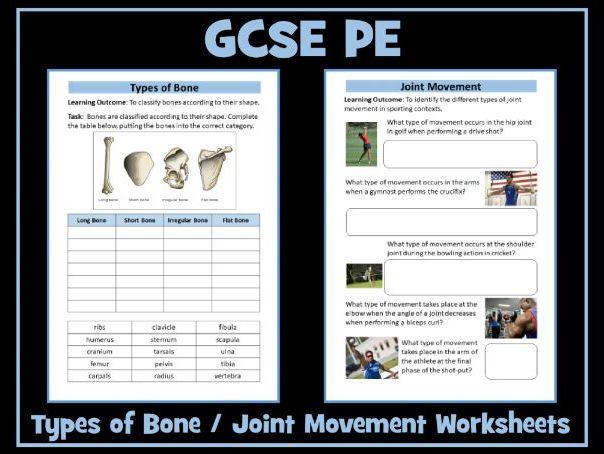GCSE PE - Types of Bones / Joint Movement