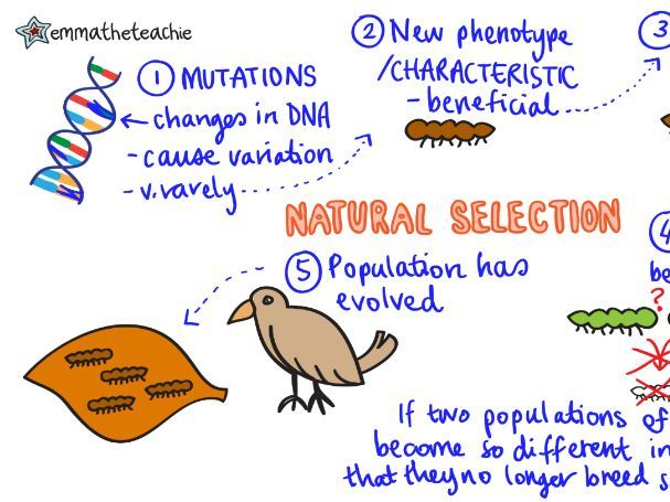 EVOLUTION BY NATURAL SELECTION Revision Video GCSE 9-1 Bio & Combined Science