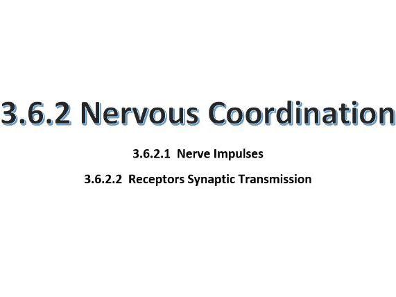Nervous Coordination