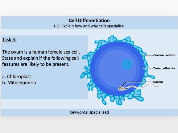 Cell Differentiation / Specialised Cells