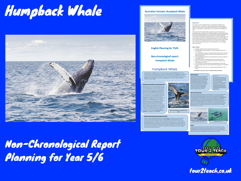 Humpback Whale: Non-Chronological Report Planning for Year 5/6