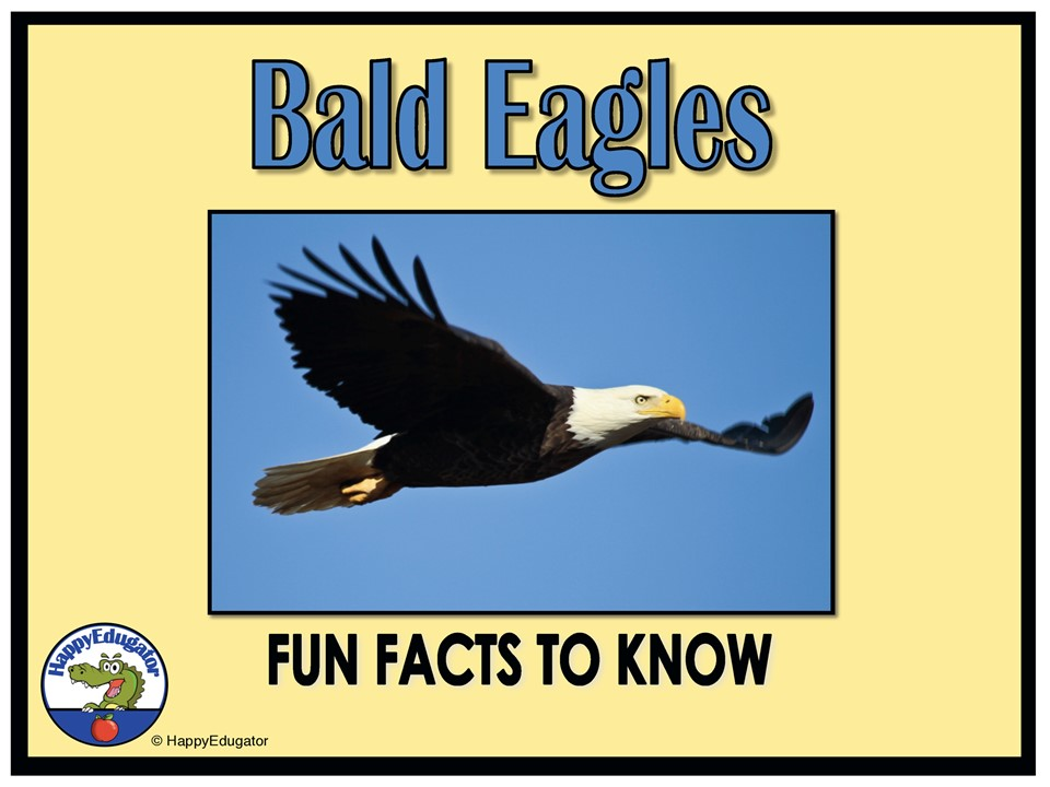 American Bald Eagles PowerPoint