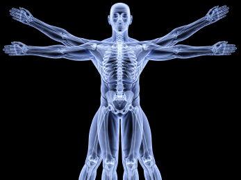 AQA GCSE PE - New Spec - 2016 - Anatomy