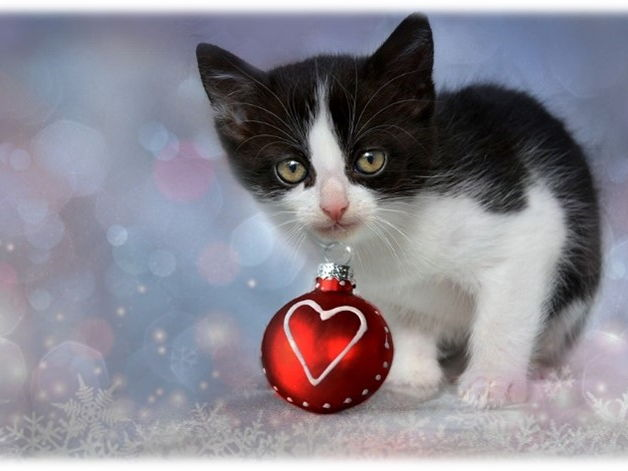 comprehension about Christmas cat: action verbs