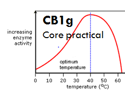 CB1g - revision - enzymes pH, temperature and substrate concentration.