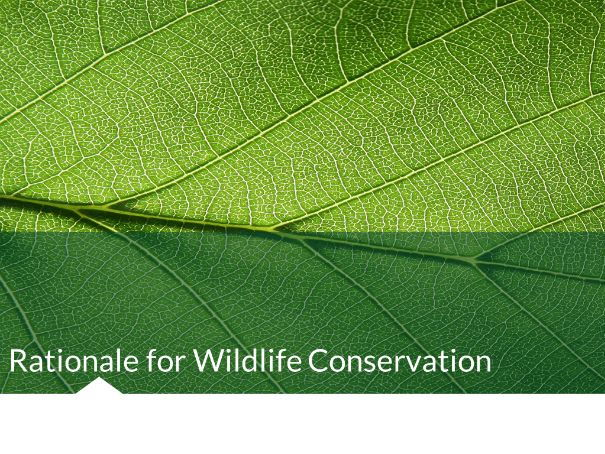 Rationale for Conservation (Economical Reasons) Environmental Science