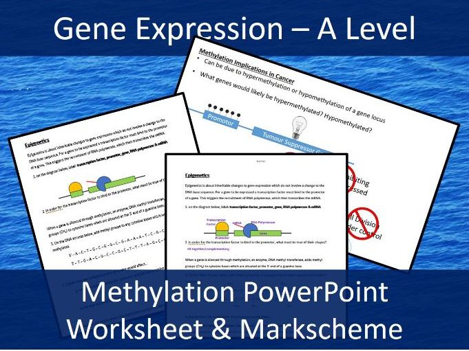 Epigenetics - Methylation - A Level Biology Presentation, two-sided worksheet and Markscheme