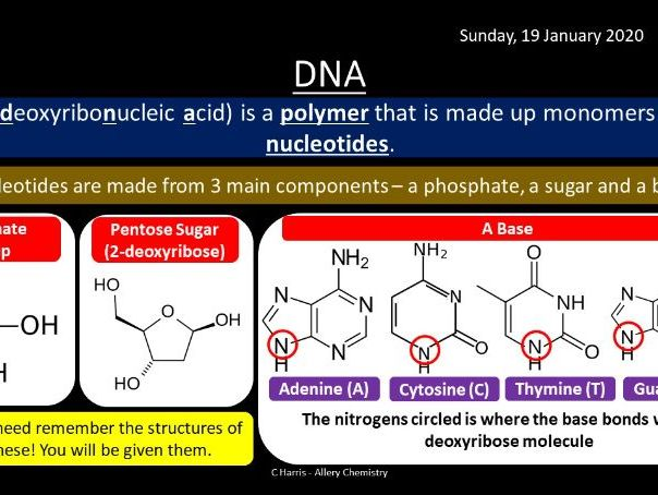 NEW AQA Yr2 Amino Acids, Proteins and DNA Revision