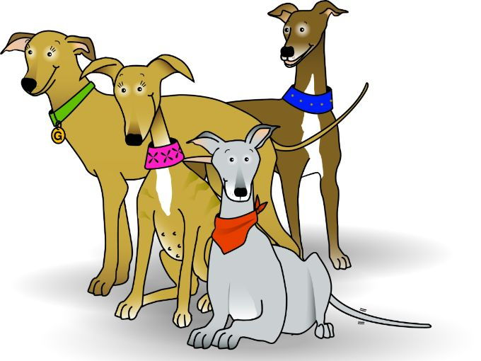 Meet the galgos