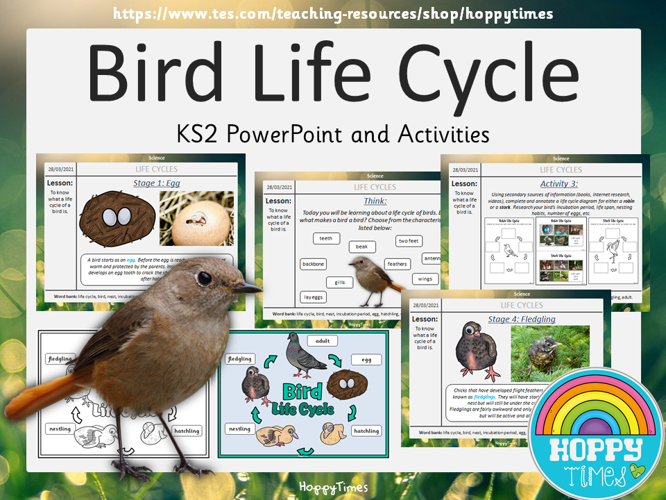 Bird Life Cycle Lesson