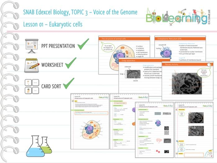 SNAB Biology Topic 3 -  Lesson 01 (Eukaryotic cells) - WS, PPT and Card sort