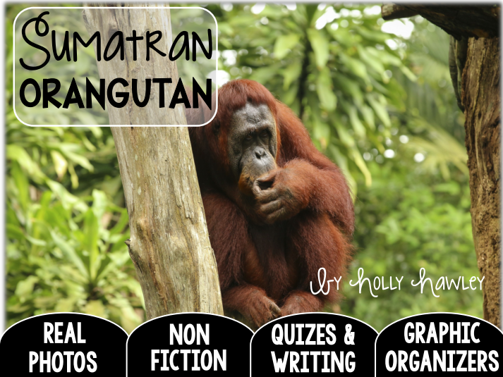Sumatran Orangutan-A Research Project-UK Version