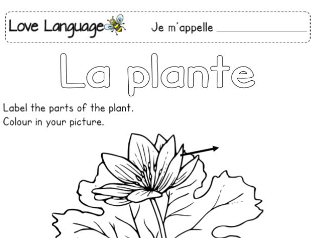 Life cycle of a plant in French - labelling worksheets