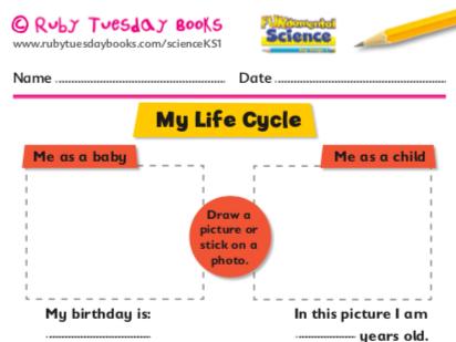 My life human cycle