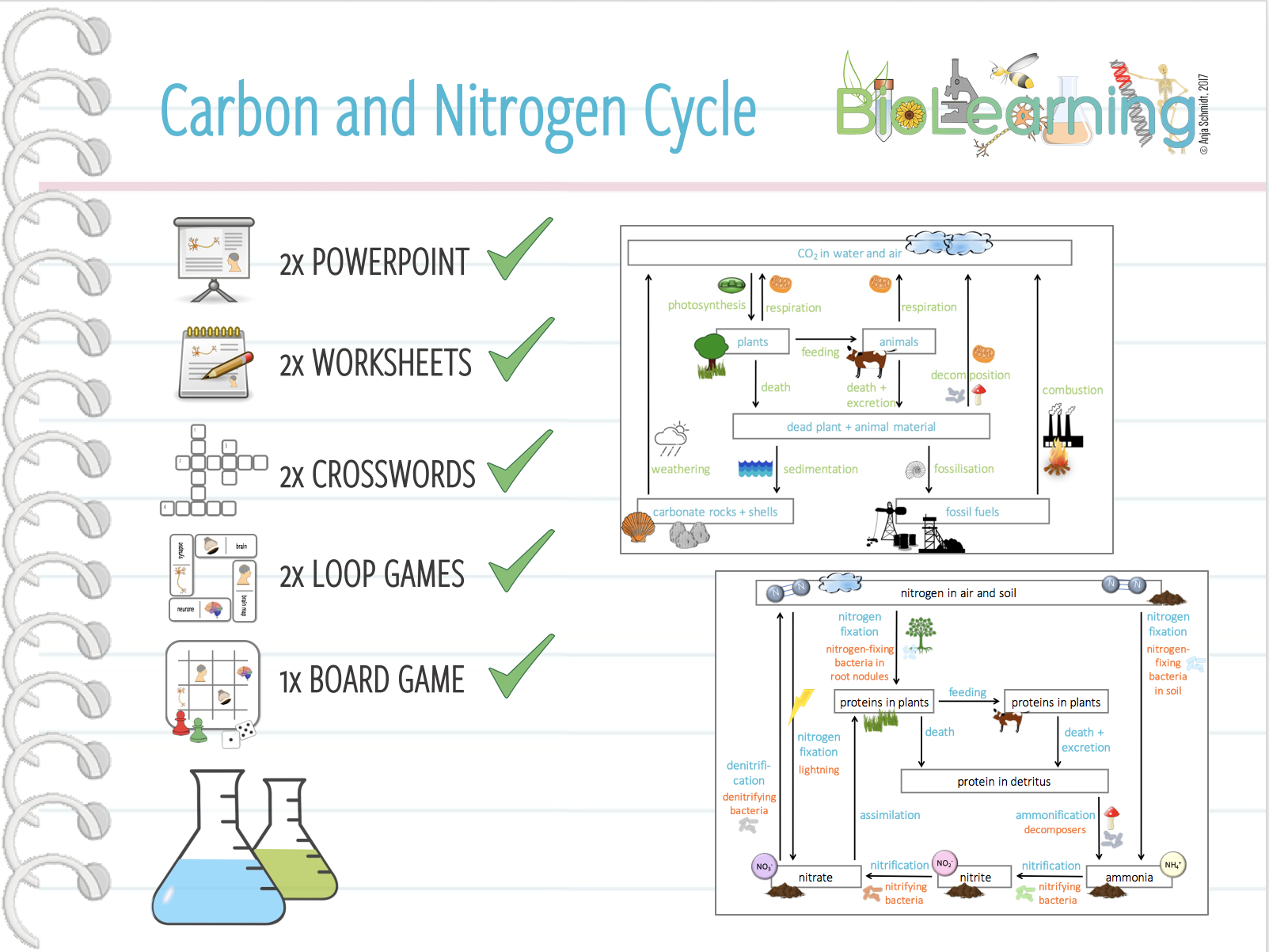 Cycle Nitrogen Worksheet High School on Nitrogen Cycle Worksheet High Best Free Printable