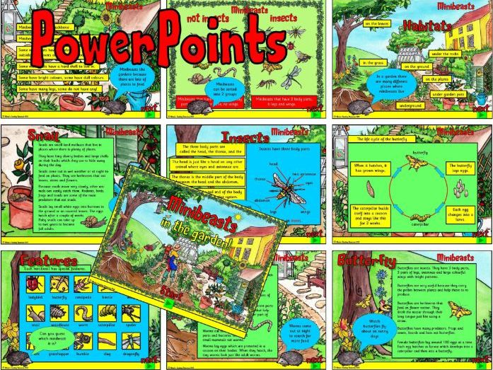 Minibeasts PowerPoints – KS1