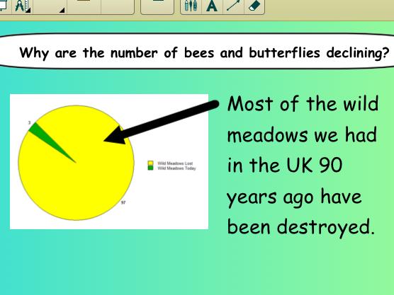 Pollination/Wild Flower Seed Balls Presentation