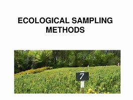 OCR A level Biology Sampling strategies