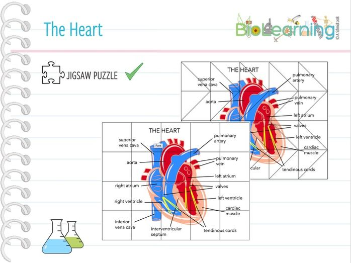 The Heart - Jigsaw puzzle (KS4/KS5)