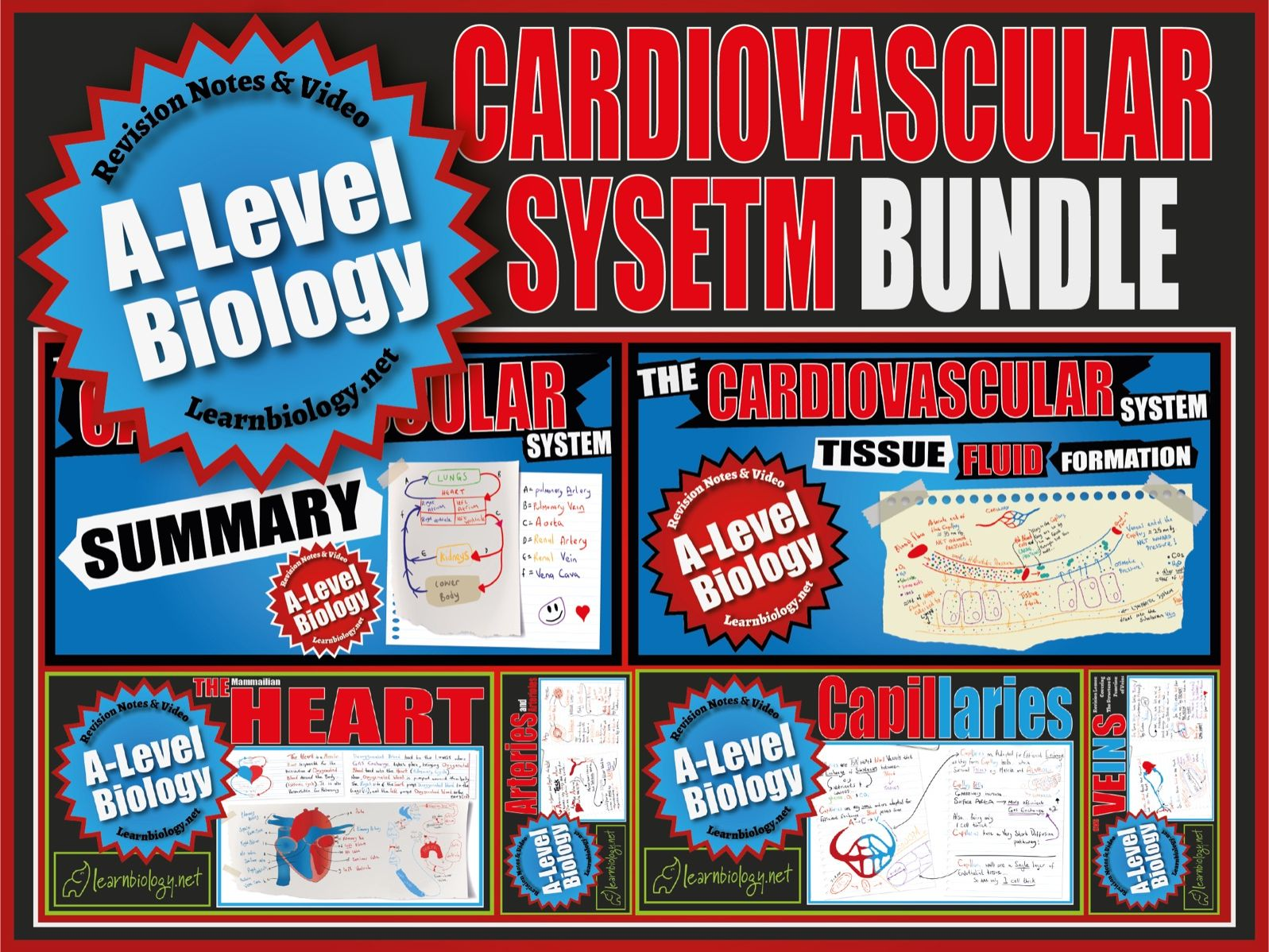 A-Level Biology: The Cardiovascular System, Revision Notes and Worksheets.