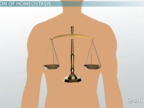 Homeostasis and feedback mechanisms