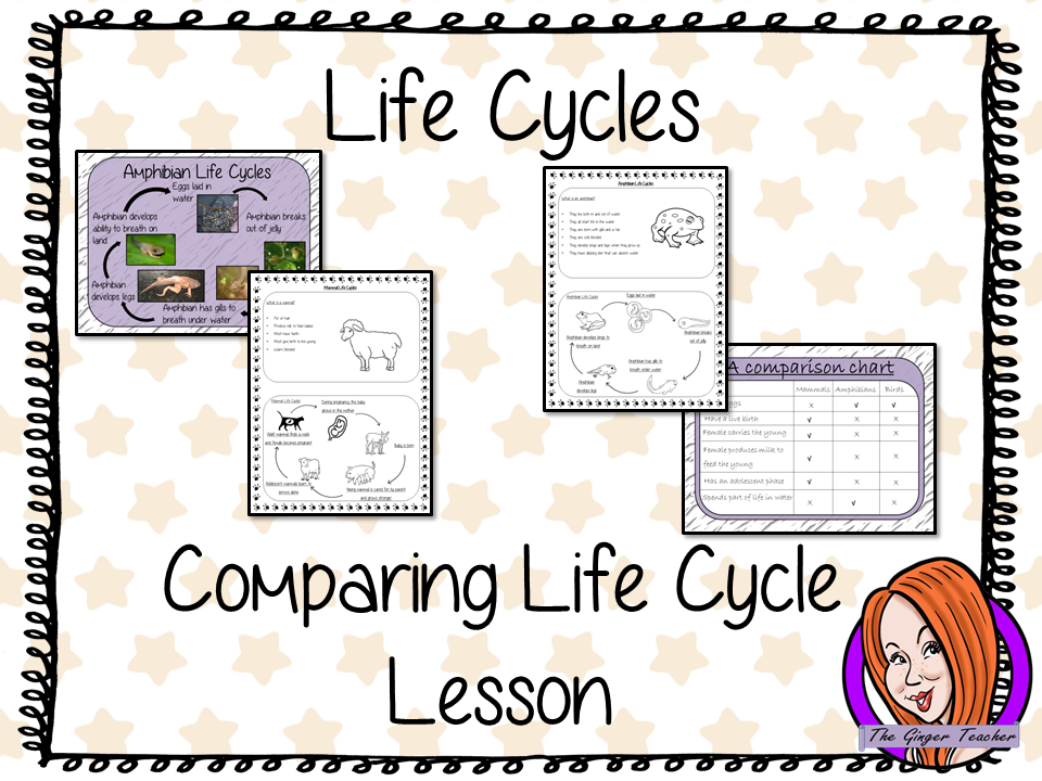 Comparing  Life Cycles   -  Complete Science Lesson