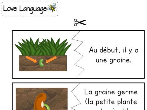 Life cycle of a plant in French - matching sentences