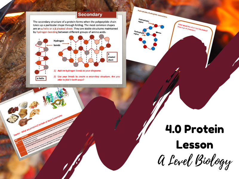 Proteins / Biomolecules - A Level Biology (4 Lessons with resources)