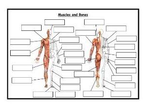 GCSE PE - Edexcel (9-1) - Combined Blank Skeleton and Muscles Worksheet