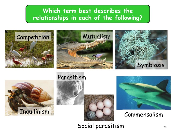 Populations & sustainability: Interactions between populations A-level biology
