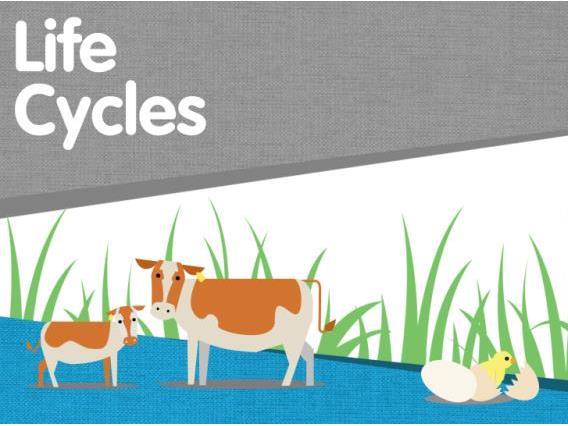 Life Cycles on the Farm