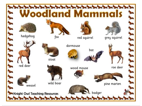 Woodland Mammals Word Mat