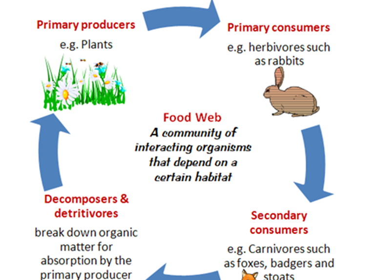 Primary Science Key Stage 1/2 Living Things andTheir Habitat:  Food Webs