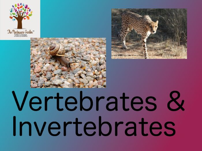 Montessori Classification: Vertebrates and Invertebrates
