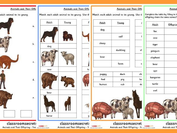 Year 2 Animals and their Offspring Science Resource