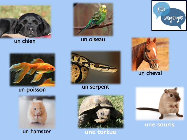 Pets - French lesson plan