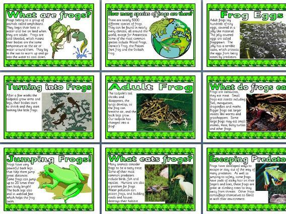 Fantastic Frogs Display Posters