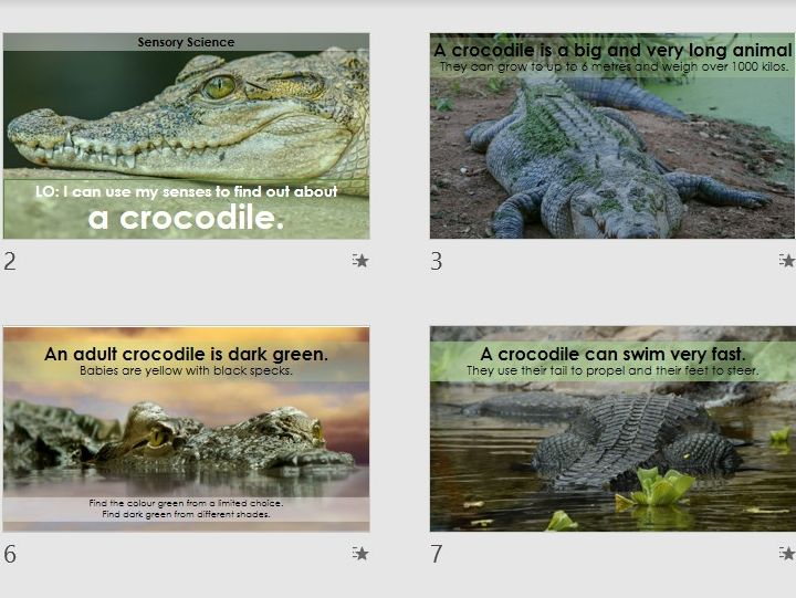 Crocodiles Sensory Science